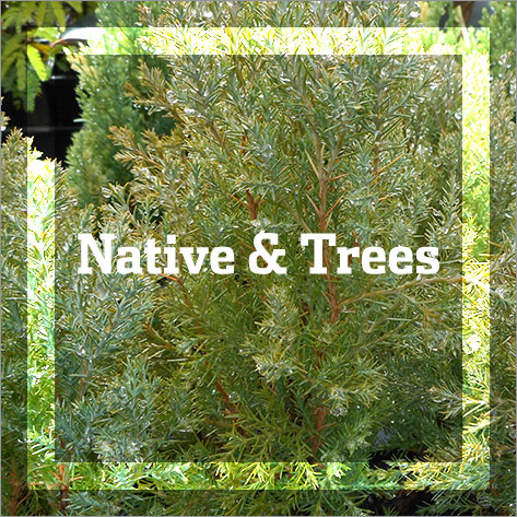 Native & Trees